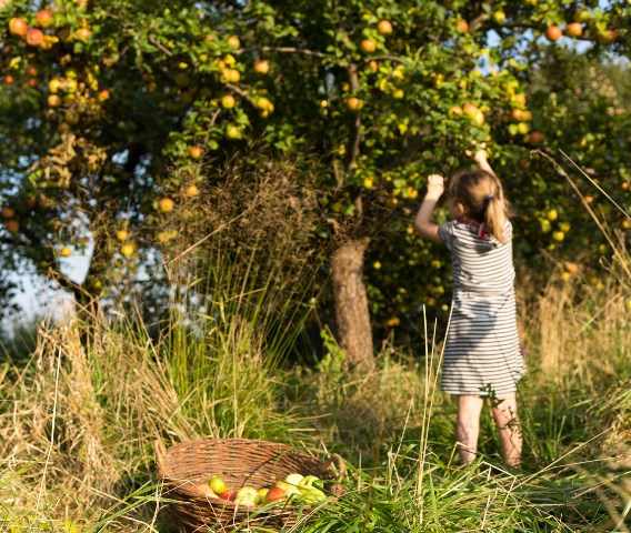 npdh Duunddeingartenimnaturpark bizstorkow Du und dein Garten im Naturpark Dahme Heideseen