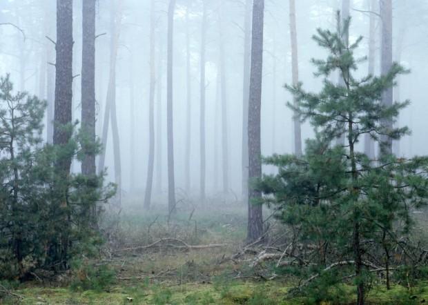 npdh Kiefer im Nebel sonnenberg 620x442 Märchenwanderung über die Lesefährten Waldweisen am 19. November
