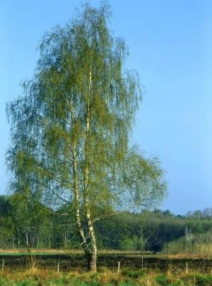 Frühling am Südufer des Pätzer Hintersees (W. Klaeber)