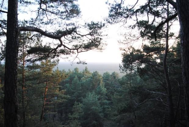 npdh blick stragans sonnenberg 620x415 Wildnis in Naturparken   Projektexkursion in den Naturpark Dahme Heideseeen