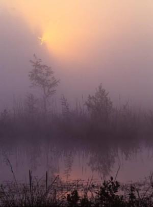 Morgennebel im Moor (Foto: W. Klaeber)
