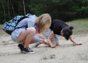 Naturbeobachtung im brandenburgischen Sand (H. Sonnenberg)