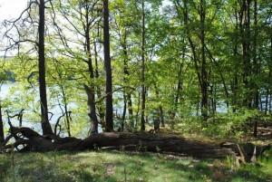 Wildnisgebiet Dubrow (Foto: Hans Sonnenberg)