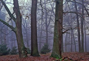 Eichenhale in der Dubrow (W. Klaeber)