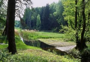 Eine Fuhrt führt durch den Graben zwischen der Löptener Fenne und den Wustrickwiesen bei Groß Köris (Foto: W. Klaeber)