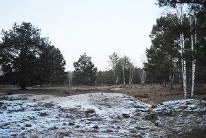 Sandrasen und Heide im Wildnisentwicklungsgebiet Streganz © Hans Sonnenberg