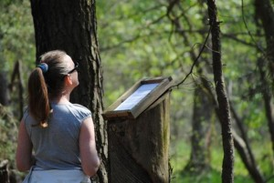 Auf der Lesefährte Waldweisen (Foto: Sonnenberg)