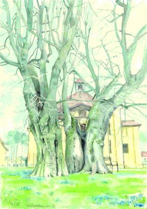 Linden in Lindenberg (Zeichnung Inka Lumer)