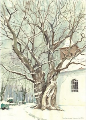 Maulbeerbaum in Birkholz bei Beeskow (Inka Lumer)