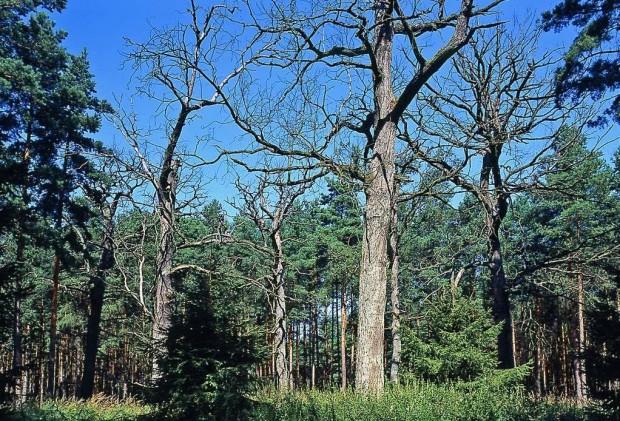 Wege zu bemerkenswerten Bäumen
