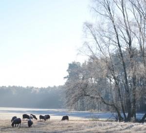Schafsweide auf einem Trockenrasen für den Naturschutz (Foto: Hans Sonnenberg)