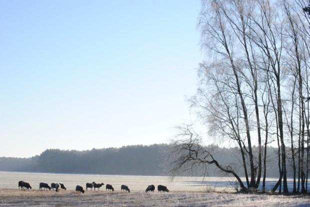 npdh schafsweide kleinköris sonnenberg 620x415 Winter im Naturpark