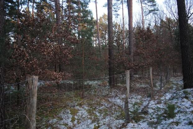 npdh stragans waldumbau sonnenberg 620x415 Wildnis in Naturparken   Projektexkursion in den Naturpark Dahme Heideseeen