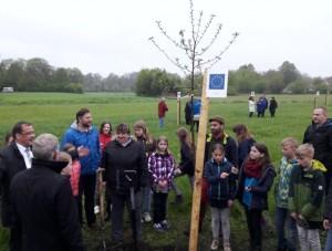 """Kindern der Europaschule Storkow pflanzten eine Baum der Sorte """"Gravensteiner"""" (Foto: G. Heyne)"""