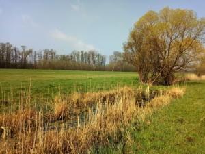 Salzwiese mit Amphibien-Kleingewässer bei Selchow im April 2018 © Hans Sonnenberg