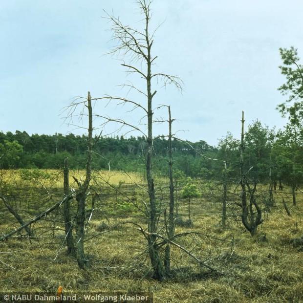 schmolluch 620x620 Life Projekt Feuchtwälder startet auch im Naturpark Dahme Heideseen