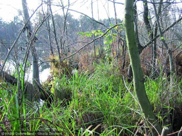 skaby 620x465 Life Projekt Feuchtwälder startet auch im Naturpark Dahme Heideseen