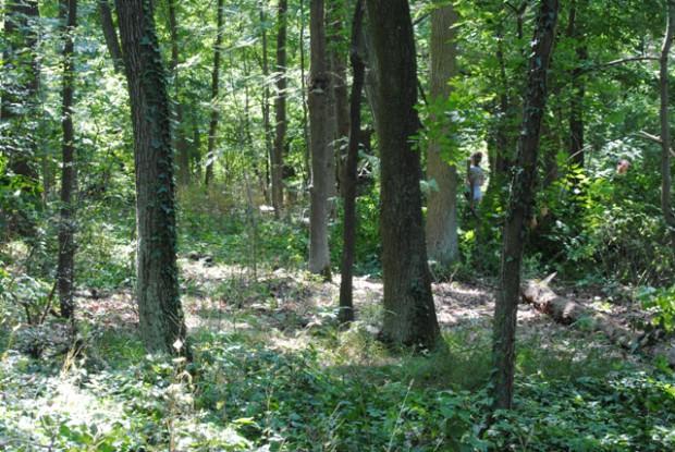 sutschke trockenwald 620x415 Naturschutzeinsatz im Sutschketal