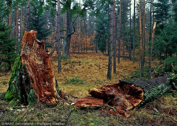 trauebneiche 620x442 Noch einmal im Herbst   Besuch beim Baum des Jahres 2014