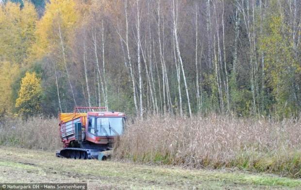 wmh 620x392 Feuchtwiesen werden gepflegt