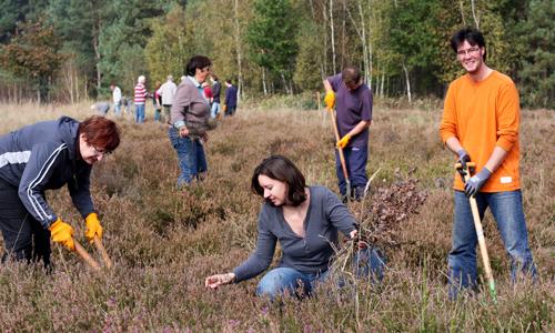 0017 Toller Auftakt: 40 Freiwillige im Heidekraut Einsatz