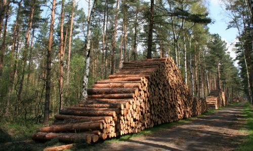 0722w2 Wälder im Naturpark Dübener Heide wieder betretbar