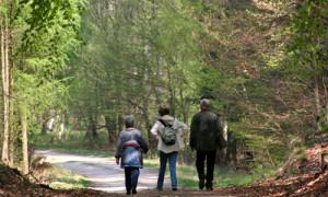 Wandern im Naturpark Dübener Heide