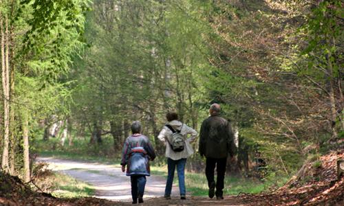0784 Wildtiersonntag führt in den herbstlichen Heide Wald