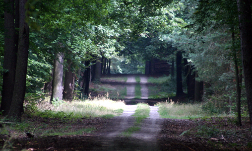 08561 Themenradtour: Wald in Zeiten des Klimawandels