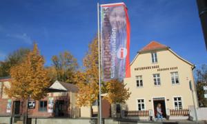 (C) Verein Dübener Heide