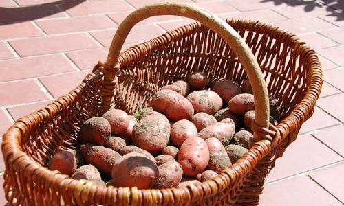 663320 original R K B by as pixelio.de  Freyas Kartoffel Gemüse Salat aus Dommitzsch