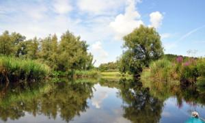 (C) Naturpark Biesbosch