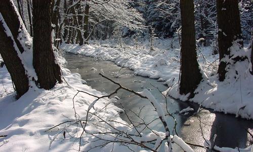 DSC030991 Neujahrswanderung in der Dübener Heide