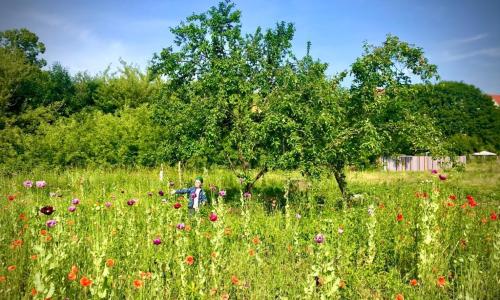 Die Streuobstwiese in voller Pracht Foto Karl neumann Schule Ein blühender Garten für die Karl Neumann Schule in Eilenburg