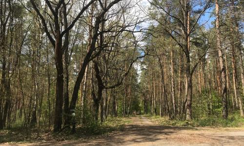 Es grünt und blüht im Heidewald Wandern mit Abstand am schönsten: Gästeführungen im Naturpark Dübener Heide
