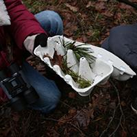 Fundstücke aus dem Winterwald (C) VDH