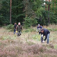 Heidekraut-Aktionstag in der Dübener Heide (C) Naturpark Dübener Heide