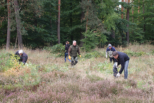 Heidekrautaktionstag in der Dübener Heide 500 300 test 5. Heidekraut Aktionstag: Freiwillige entkusseln die Dübener Heide