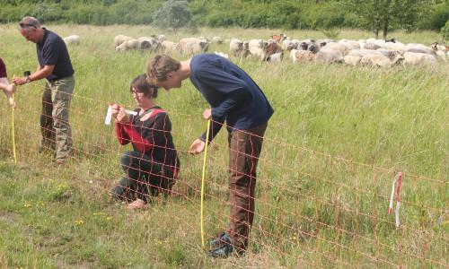 Herdenschutz Foto Axel Mitzka 500 Workshop zum Thema Herdenschutz mit Schwerpunkt Rinder und Pferde