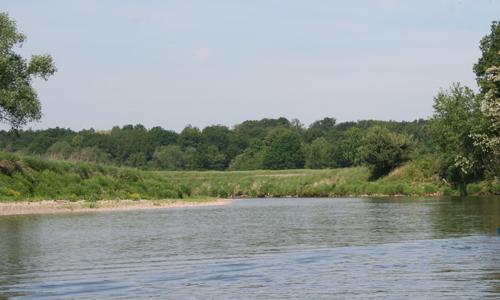 IMG 3391 Wildtiersonntag im August: Zu Gast bei Bienenfresser und Uferschwalbe