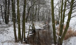 (C) Naturpark Dübener Heide