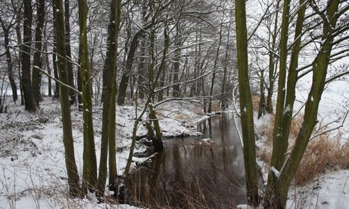 IMG 3852 Wildtiersonntag führt ins zauberhafte Presseler Heidewald  und Moorgebiet