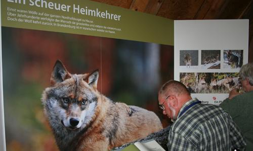 IMG 7434 Wolf und Mensch   eine neue Ausstellung ab dem 10. Januar im Naturparkhaus