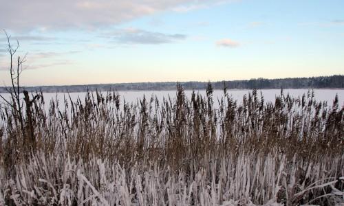 IMG 7808 2 iloveimg cropped e1515923378889 Winterwanderung mit Spurensuche am Muldestausee