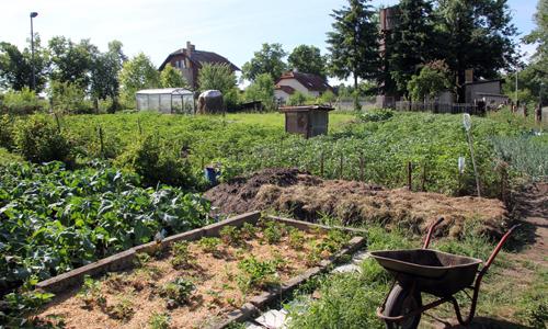 IMG 8364 1 Flächen zum Gärtnern in der Dübener Heide gesucht
