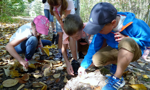 Kinder im Wald2 Entdeckertour rund um den Muldestausee