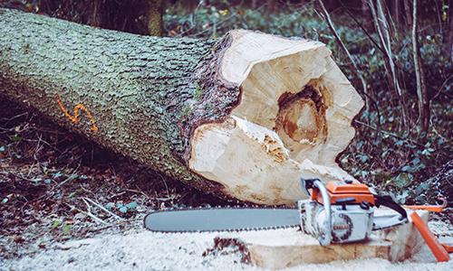 Motorsägengrundkurs Foto Markus Spiske 500 300 Motorsägengrundkurs am 10. und 11. November in Pressel