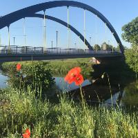 Muldebrücke in Bad Düben (C) VDH