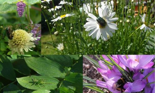Permakultur Collage C Paula Passin Online buchen, offline erleben: Unsere Naturerlebnisangebote im Juli
