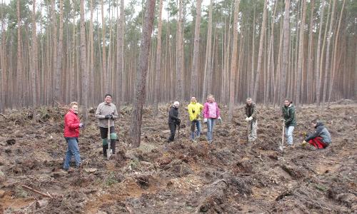 Pflanzaktion Heidewald 500 Mit viel Leidenschaft und Engagement: Pflanzaktionen im Heidewald